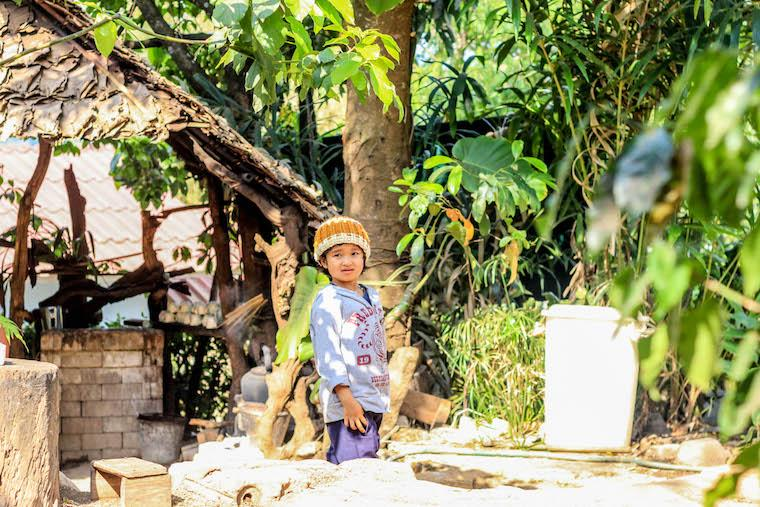 Royal Project - O projeto que transformou plantações de ópio em fazendas orgânicas na Tailândia