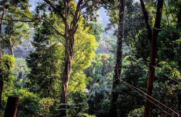 Mae Kampong, a encantadora vila entre as montanhas de Chiang Mai