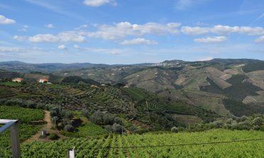A produção de vinhos portugueses e como visitar uma vinícola em Portugal