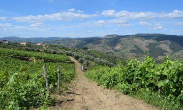 Visita a vinícolas em Portugal: Trás-os-Montes e Douro