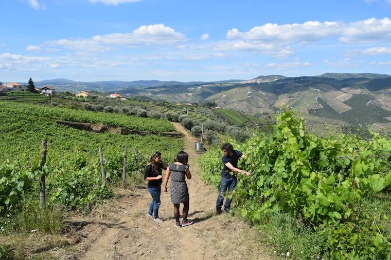 vinícolas em Portugal quinta do bucheiro