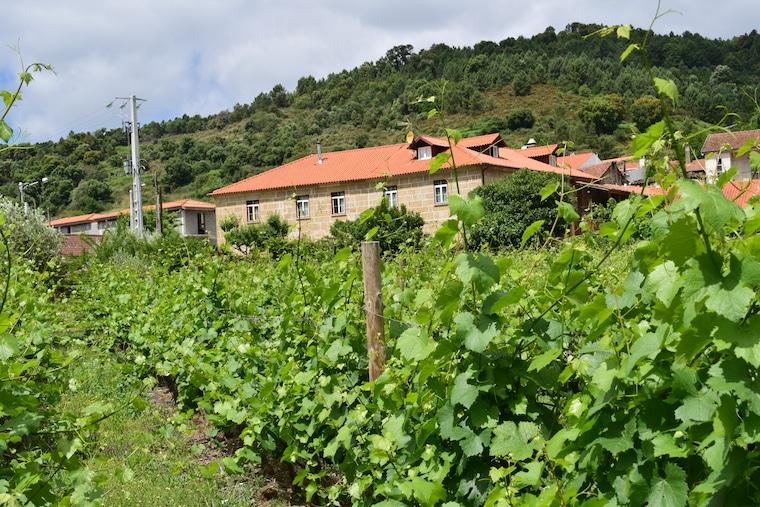 vinícolas em Portugal quinta em tras os montes