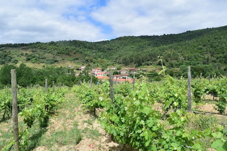 vinícolas em Portugal tras os montes
