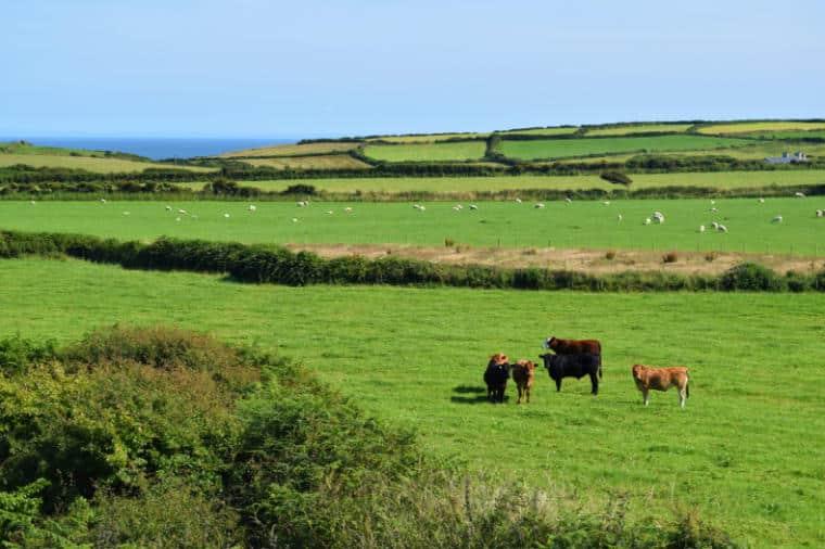 pais de gales turismo campos vacas