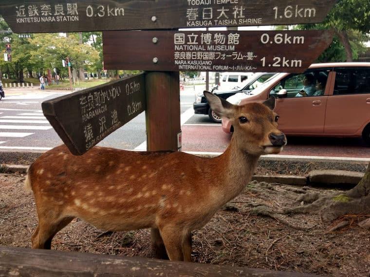 japão bambi
