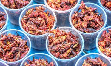 Viscoso, mas gostoso! Os insetos que são tira-gostos populares no México