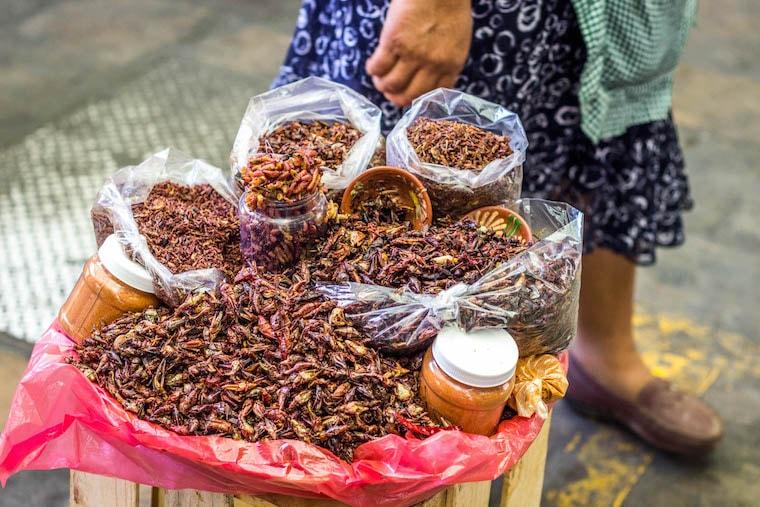 Comendo insetos no mercado de Oaxaca - Chapulines