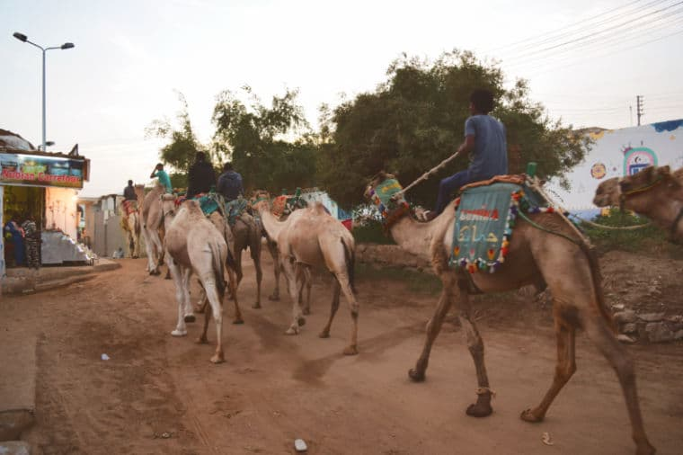 aswan egito vila nubia camelos