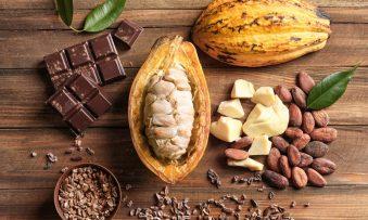 A fantástica história do chocolate: a volta ao mundo que transforma o cacau