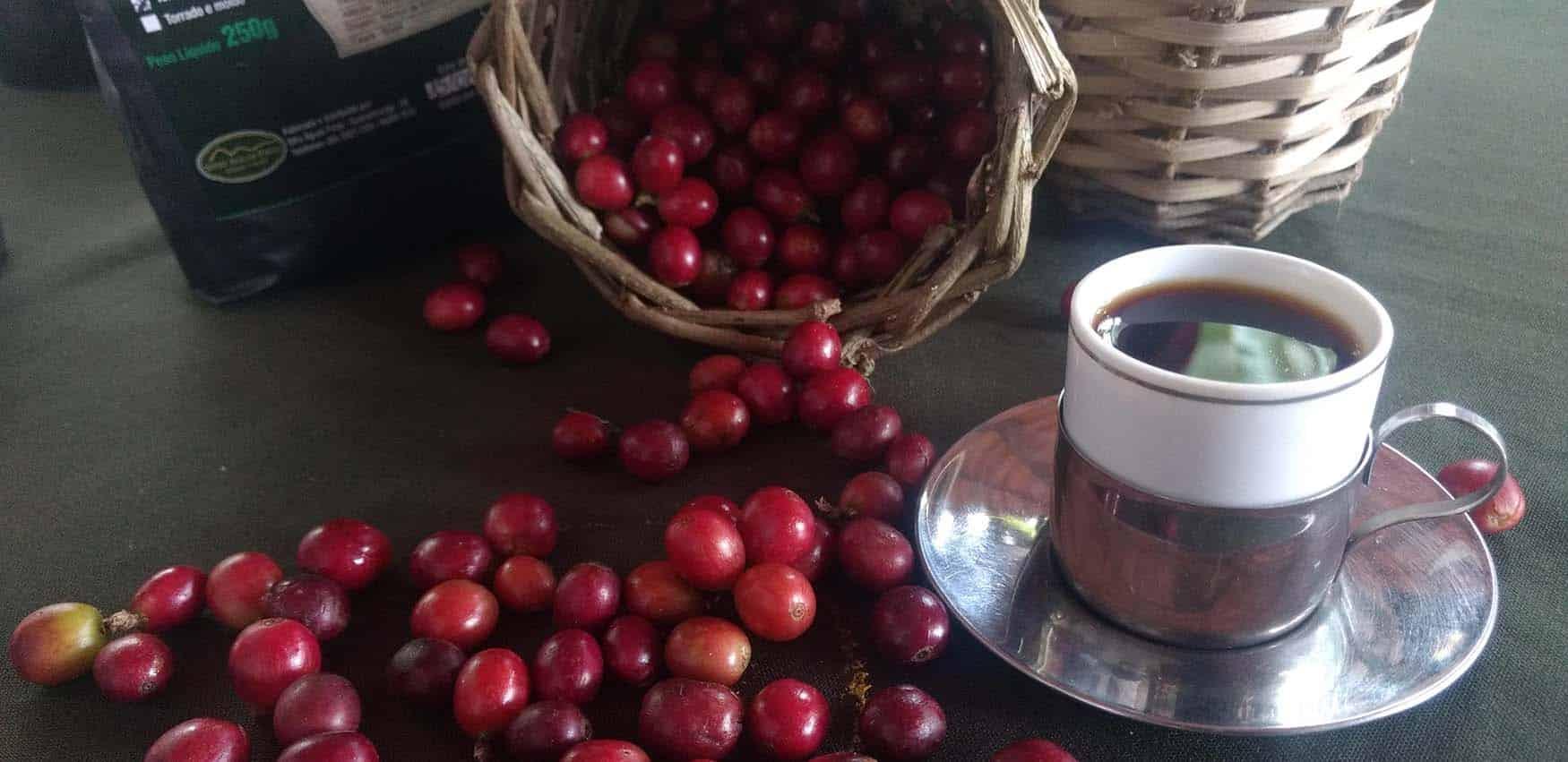 Tem Na Web - A Rota Verde do Café e a tradição cafeeira no Ceará