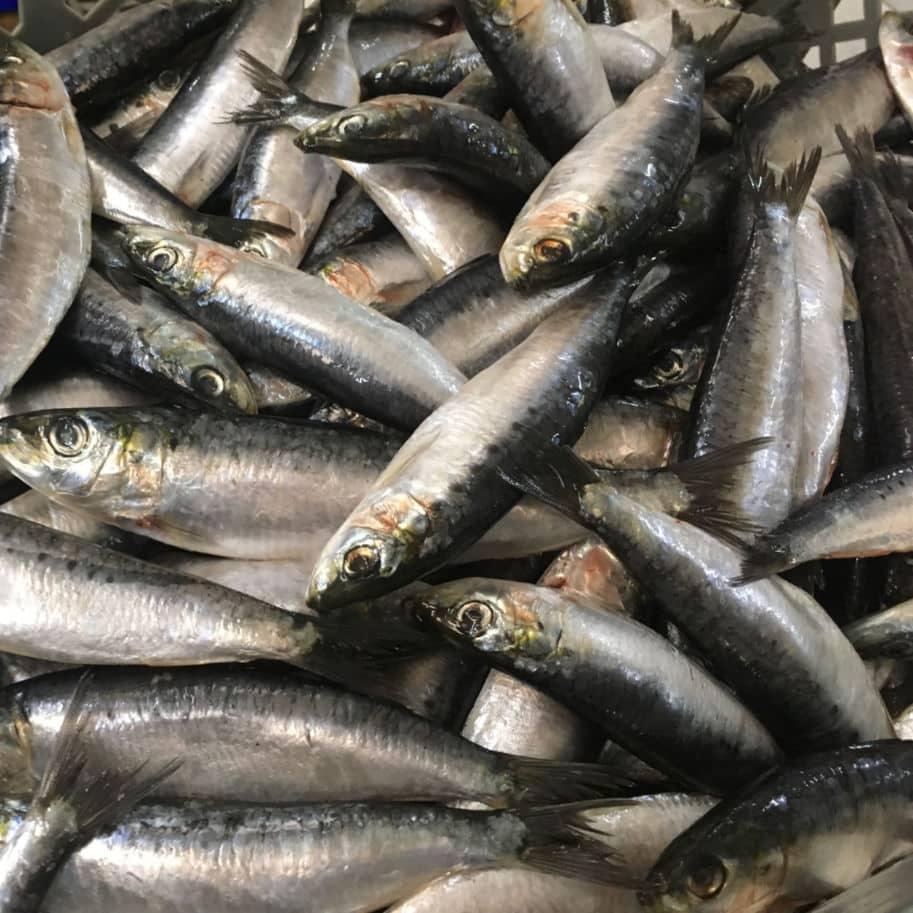 sardinhas frescas compradas no mercado