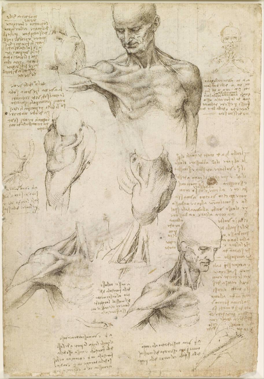 Leonardo_da_Vinci_-_Superficial_anatomy_of_the_shoulder_and_neck_(recto)_-_Google_Art_Project