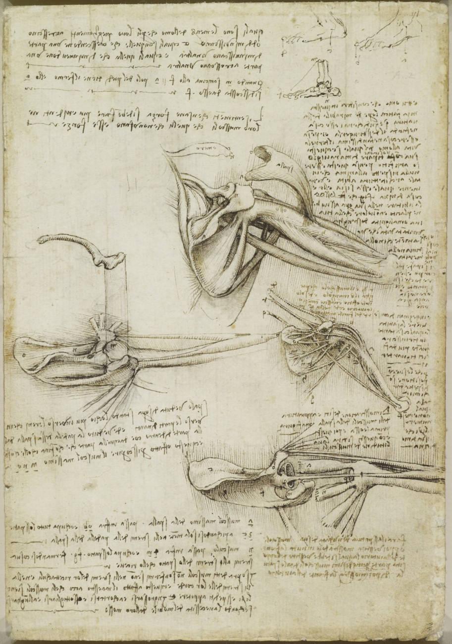 desenhos de anatomia leonardo da vinci