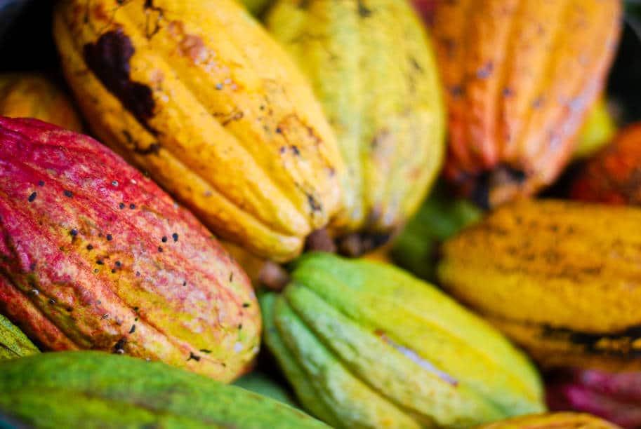 frutas de cacau america do sul