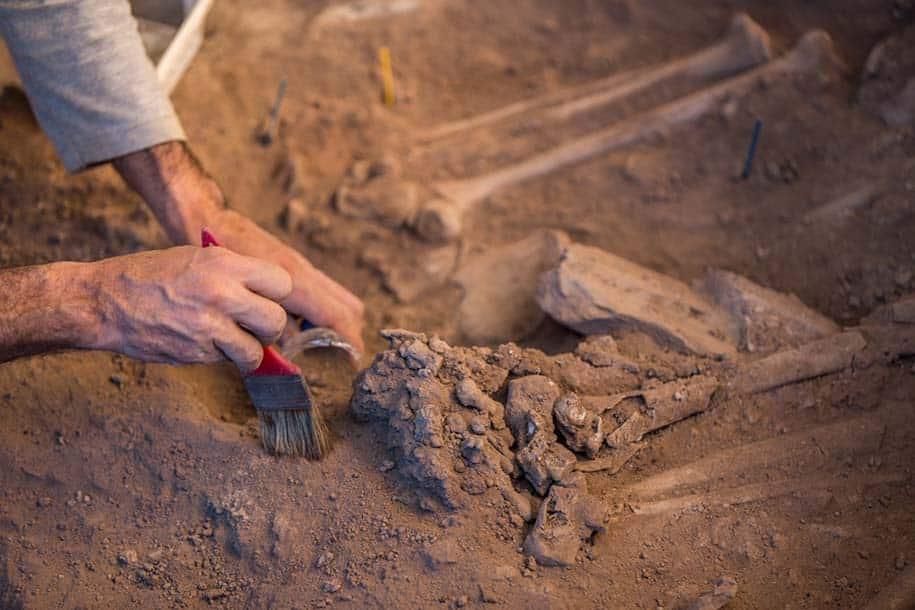 arqueólogo usa pincel para escavar ossos