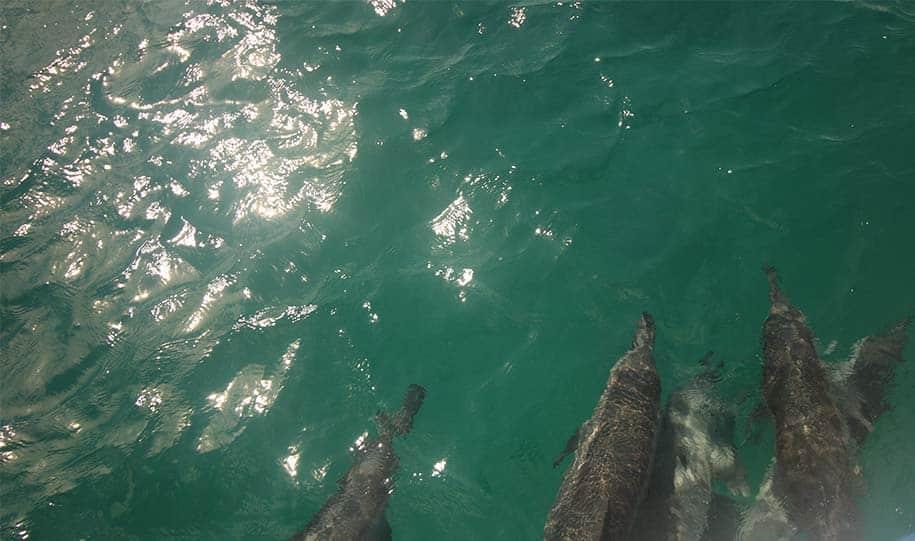 golfinhos seguem barco em passeio em Fernando de Noronha