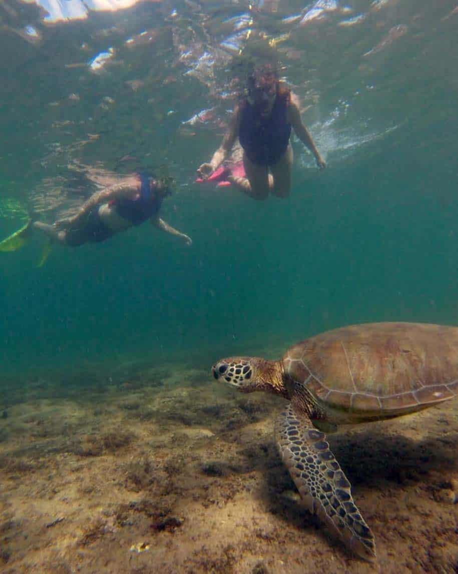 snorkeling em noronha e avistamento de tartaruga