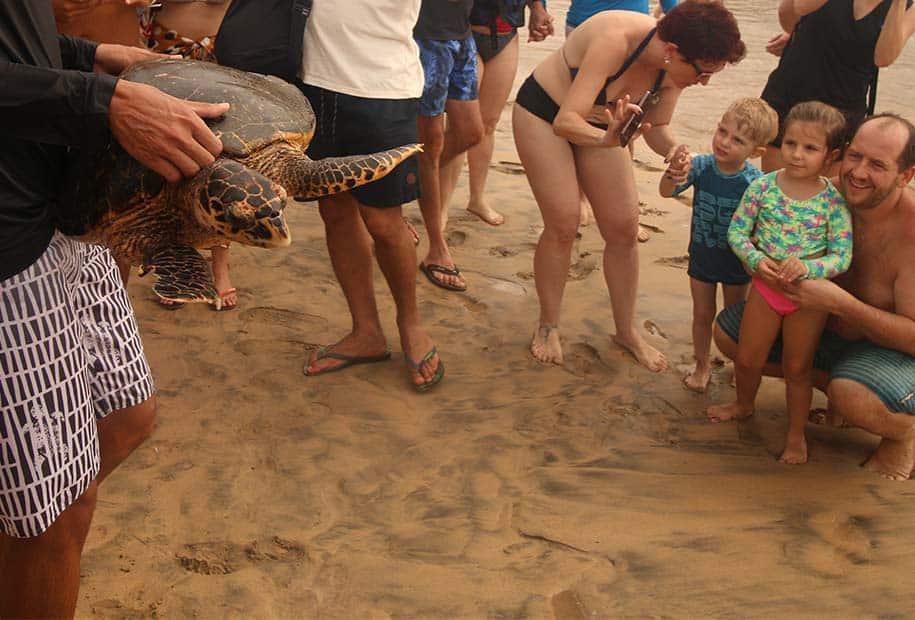 tartaruga é carregada por pesquisador do Projeto Tamar