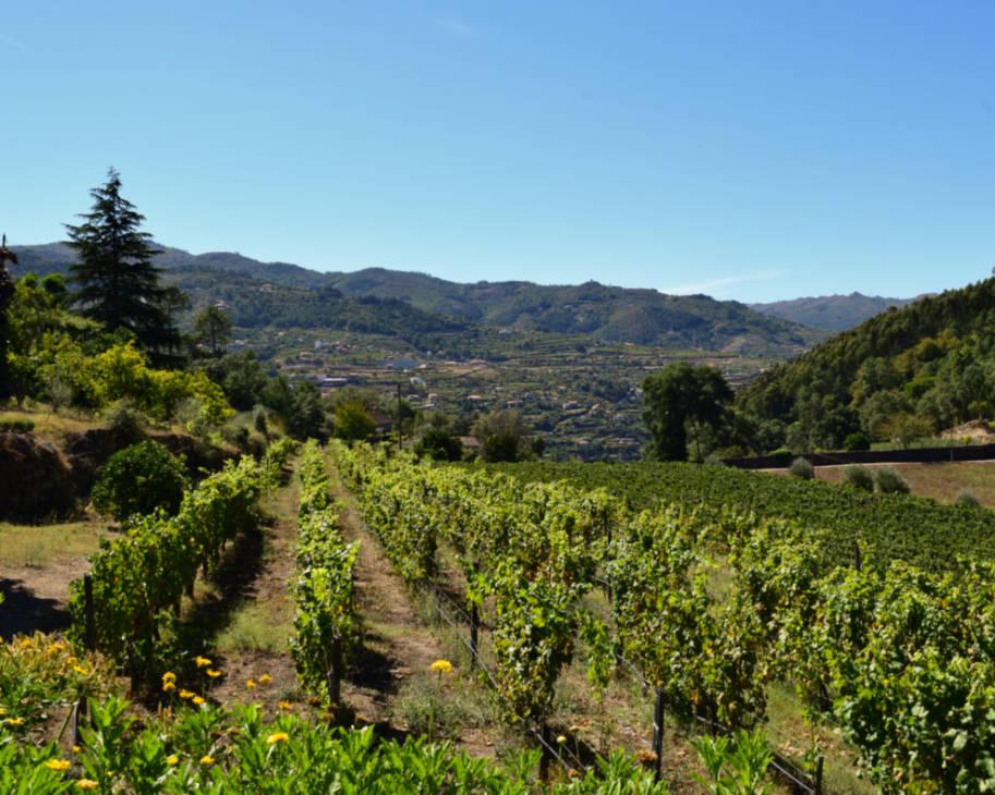 vinhas vinho verde douro portugal