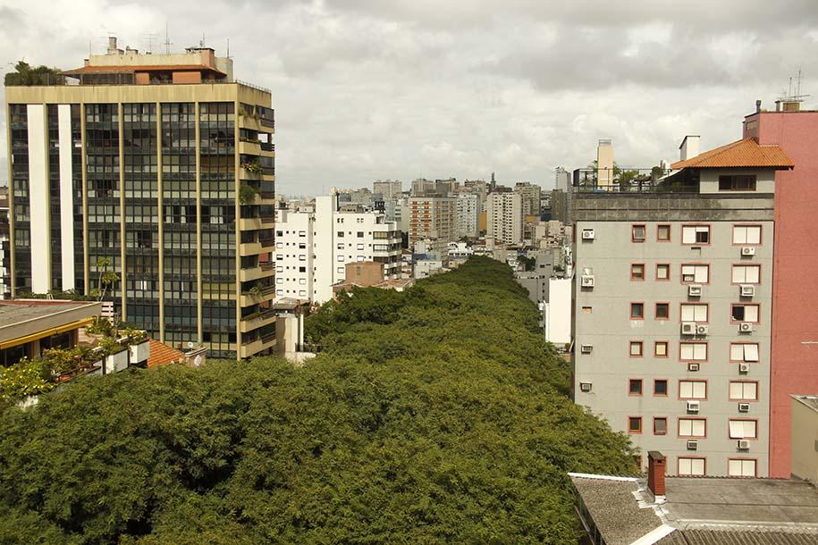 Corredor de árvores da Rua Gonçalo de Carvalho, em Porto Alegre