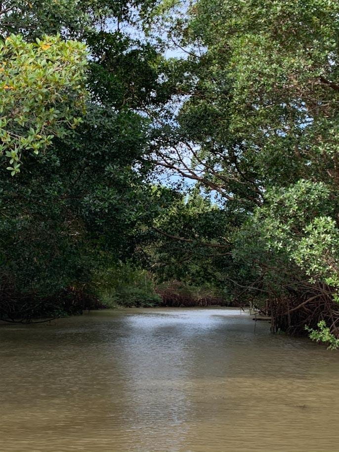 rio e mangue no rio parnaiba, no piaui