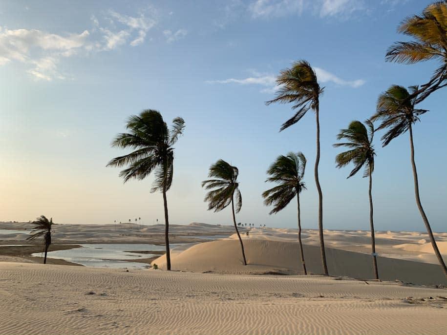rota das emoções dunas em tutoia com palmeiras