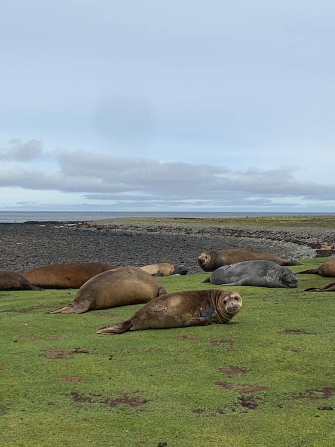 Whale Point leão marinho e elefantes marinhos