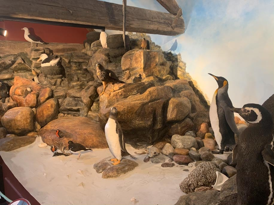museu stanley pinguins