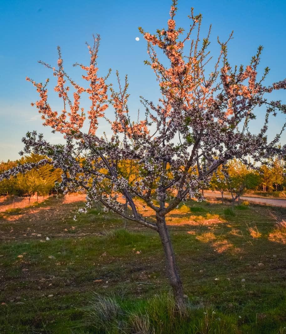 rota das amendoeiras vale do douro no inverno