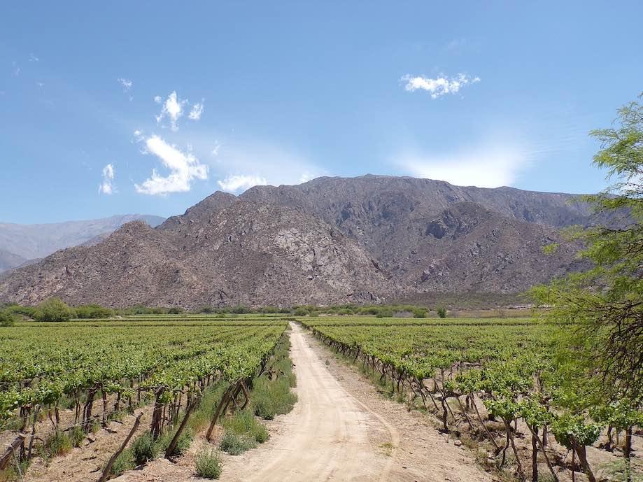 Norte da Argentina - Cafayate